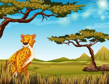 crouching: Cheetah sitting in a jungle