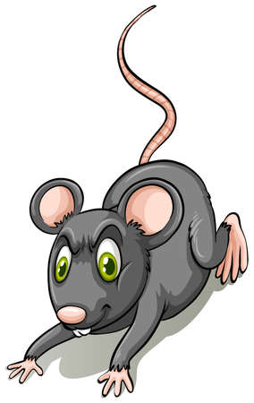rata: Rata negro sobre fondo blanco