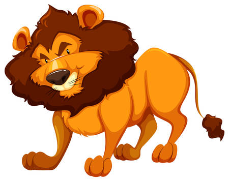 dangerous lion: Standing lion on white background Illustration