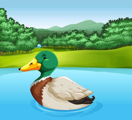 Colorful duck swimming in the lake Vector