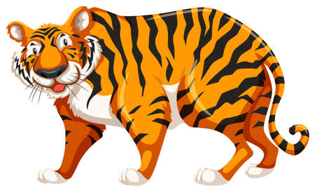 yellow tigers: Standing tiger on white background Illustration