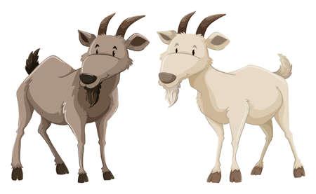 白い背景の上の 2 つの立っているヤギ