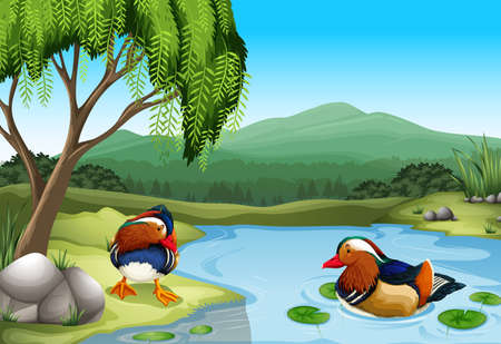 Two colorful ducks in the nature Vector
