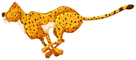on white background: Running cheetah on white background
