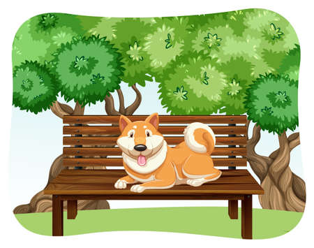 wooden bench: Dog sitting on the wooden bench in the park