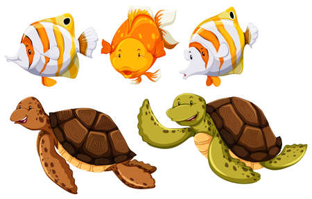 on white background: Fish and turtle on the white background Illustration