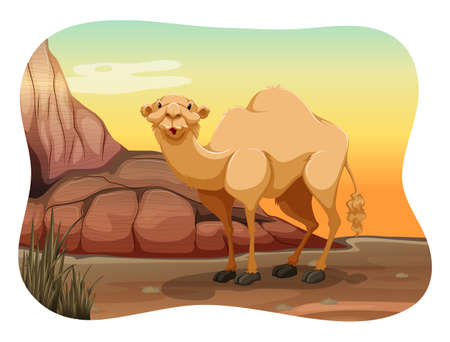 carnivores: Happy camel standing alone in the desert