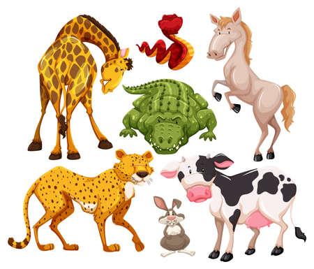 tigre caricatura: Diferentes tipos de animales en muchas acciones