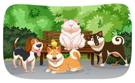 Dogs and cat in the park