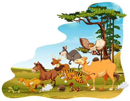 tiger white: Many animals running in the field Illustration