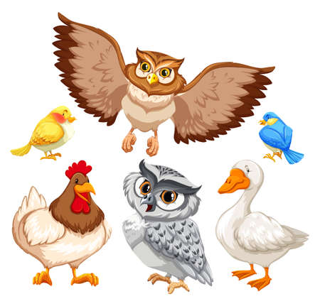 Animals with feahter and beak on white background Vector