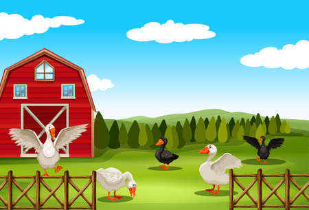 Geese living in the farmland Vector