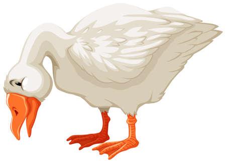 Beautiful white goose bending its neck Vettoriali