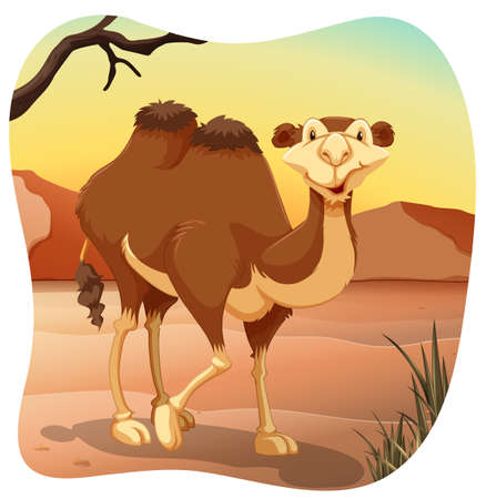 humps: One camel standing in the middle of the desert