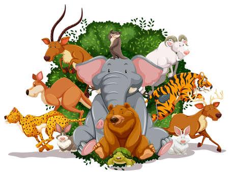 animales de la selva: Muchos animales que viven juntos en la selva