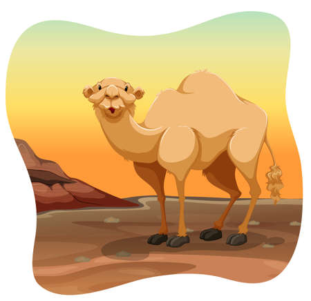 camel hump: Camel standing in the middle of a desert