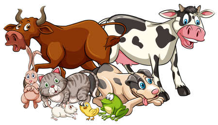 Domestic animals on a white background