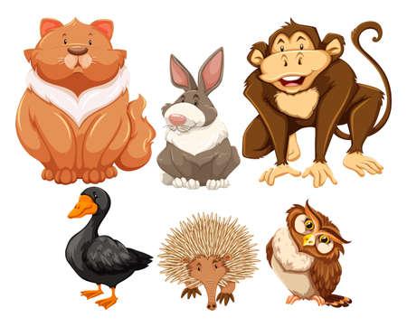 Sei diversi tipi di animali in cerca felice Archivio Fotografico - 40710711