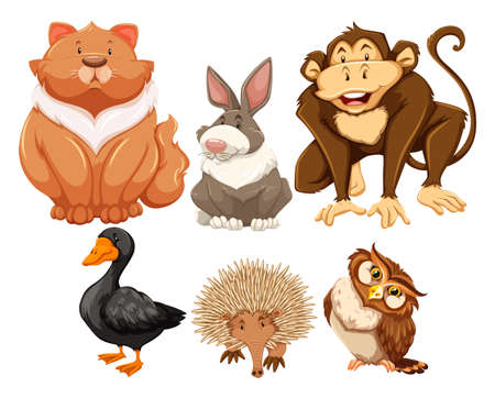Six different kind of animals looking happy