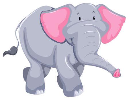 animaux zoo: Énorme éléphant debout sur fond blanc