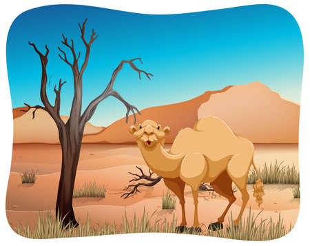 dry grass: Cute camel standing in the middle of the desert