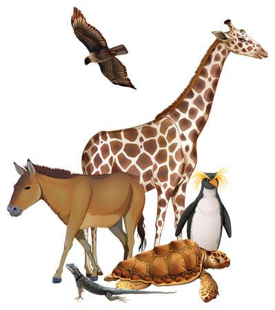 animales silvestres: Animales salvajes en un fondo blanco