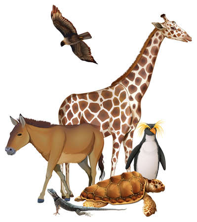 wild donkey: WIld animals on a white background Illustration