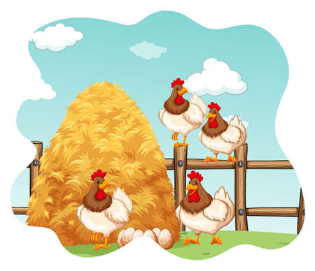 Chickens and eggs in the farm
