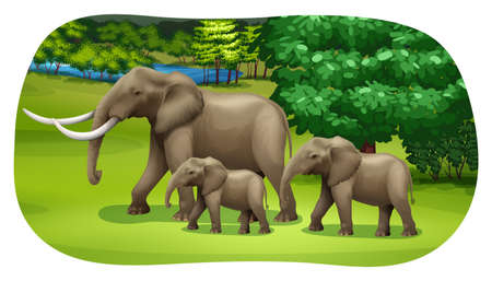 family outside: Elephants family walking through the forest field Illustration