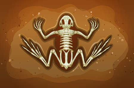 Fossil of extinct animal under the ground