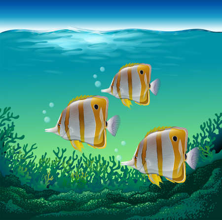 fishes: Ocean fish swimming under the sea