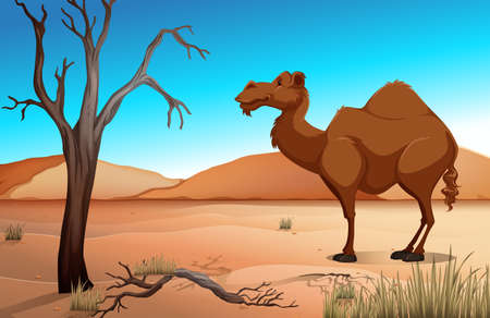 zoo dry: Camel in the desert at daytime