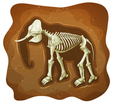 carnivorous animals: Fossil of extinct animal under the earth