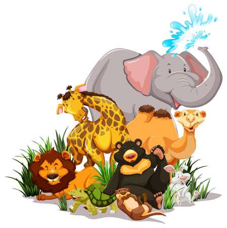 speelveld gras: Wild levende dieren in het veld gras