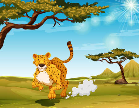 daytime: Cheetah running in the field at daytime