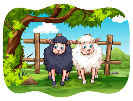 farm cartoon: Black and white sheeps in the farm Illustration