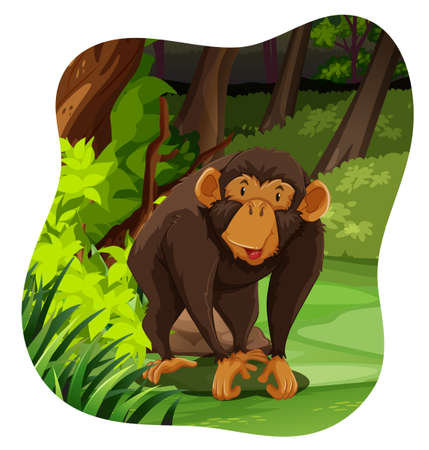 wild living: Happy monkey living in the forest