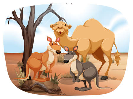 kangaroo white: Camel and kangaroos standing in the desert Illustration