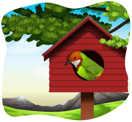 bird house: Pretty bird looking out from the bird house Illustration
