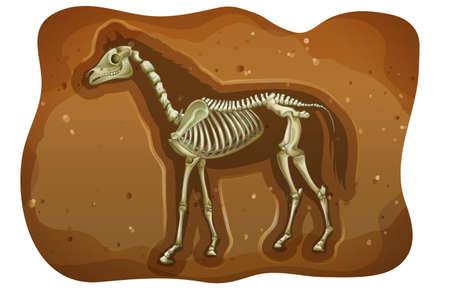 fossil: F�sil de animal extinto debajo de la tierra