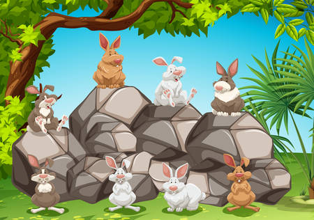 rabbits: Group of rabbits siiting in a jungle