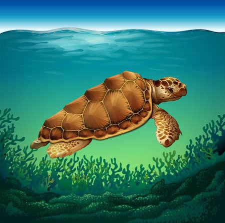 Huge brown turtle swimming in the sea