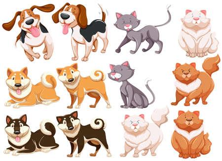 kotów: Różne pecies psów i kotów