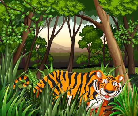 jungle animal: Paisaje de un tigre caminando en una selva Vectores