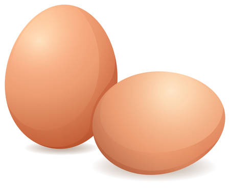 Two fresh chicken eggs without any cracks Vectores