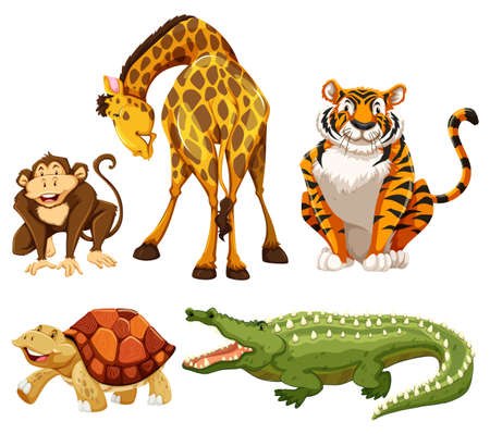 tigre caricatura: Cinco animales sobre un fondo blanco