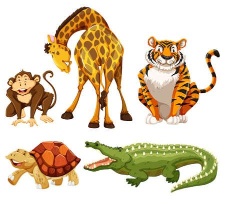 animaux zoo: Cinq animaux sur un fond blanc