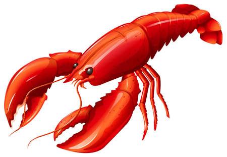 Pojedyncze czerwony homar z dwoma pazurami Ilustracje wektorowe