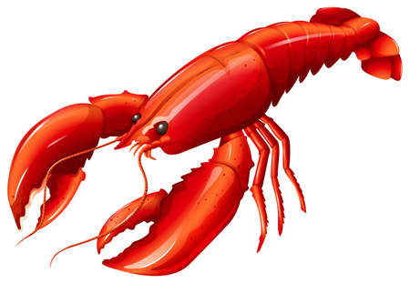 Single red lobster with two claws
