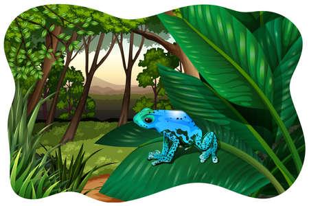 animales de la selva: Rana azul que se sienta en una enorme permiso en una selva Vectores